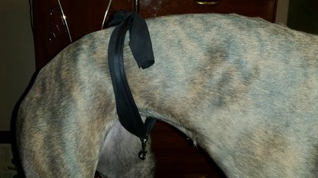The Marvelous Miraculous Tail Sling For Greyhound Happy
